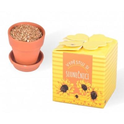 Vypěstuj si slunečnici