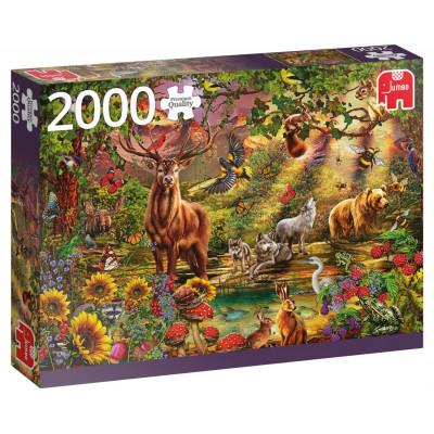 JUMBO Puzzle Kouzelný les v zapadajícím slunci 2000 dílků