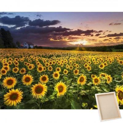 Diamantové malování s rámem - slunečnicové pole